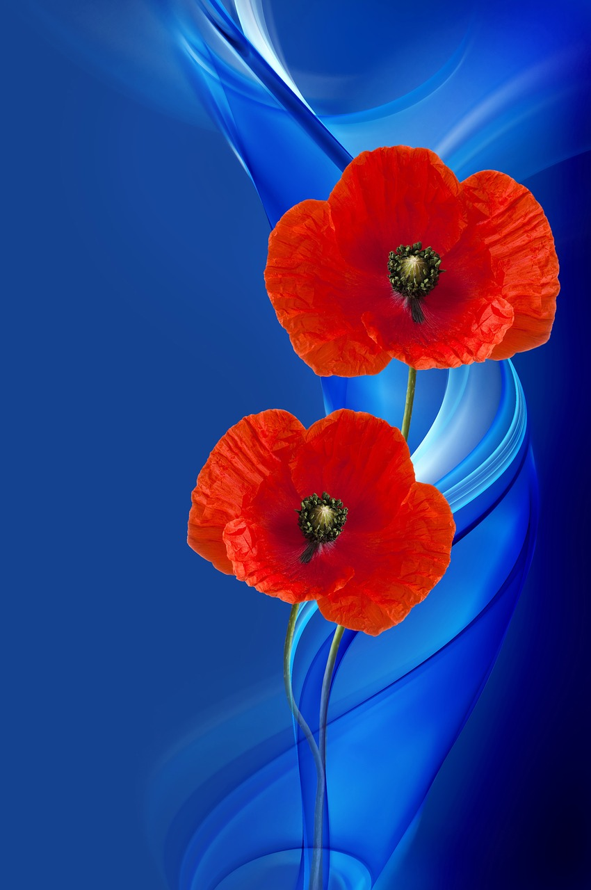 poppy-2920313_1280
